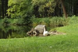 VDU Kauno botanikos sodas