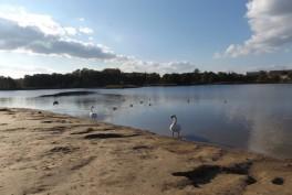 Salotės ežeras Vilniuje
