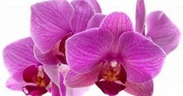 """Grožio salonas """"Orchidėja"""""""